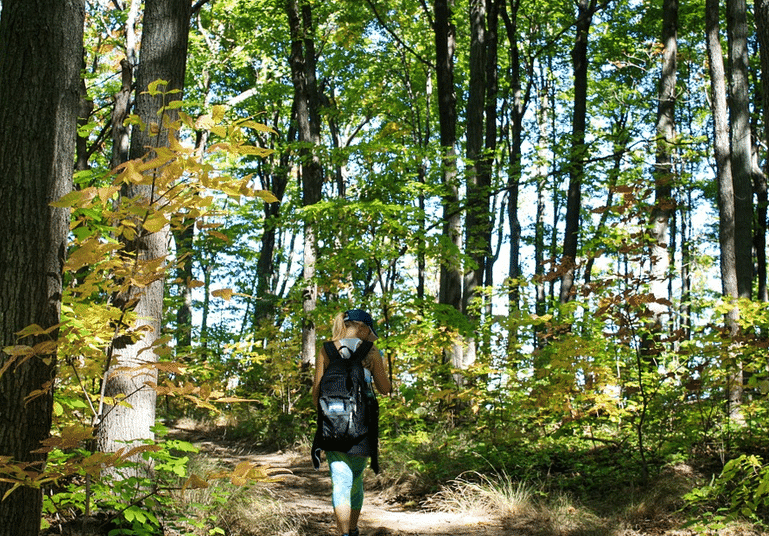Solitary hiker with trekking sticks in a forest